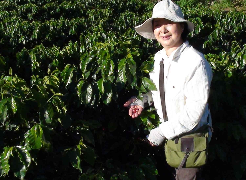従業員の家の庭に植えたコーヒーの木もすくすく育っています。