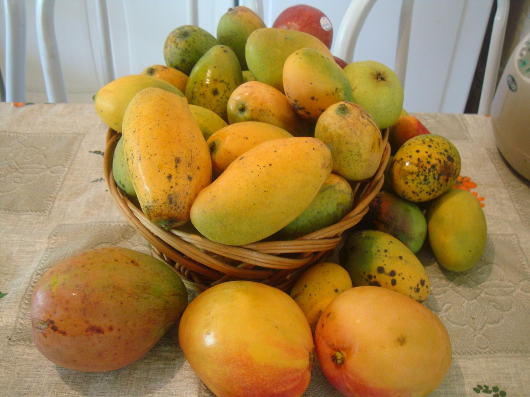 マンゴが沢山採れ、毎日たっぷりいただきました。
