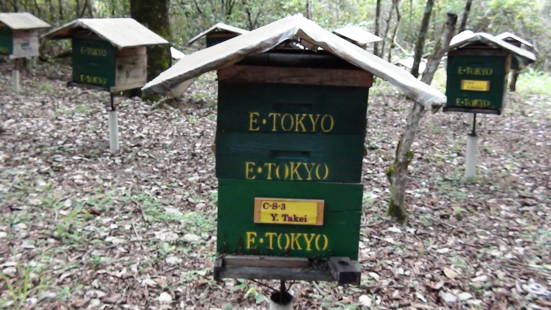 養蜂園に設置されている巣箱オーナーの巣箱。