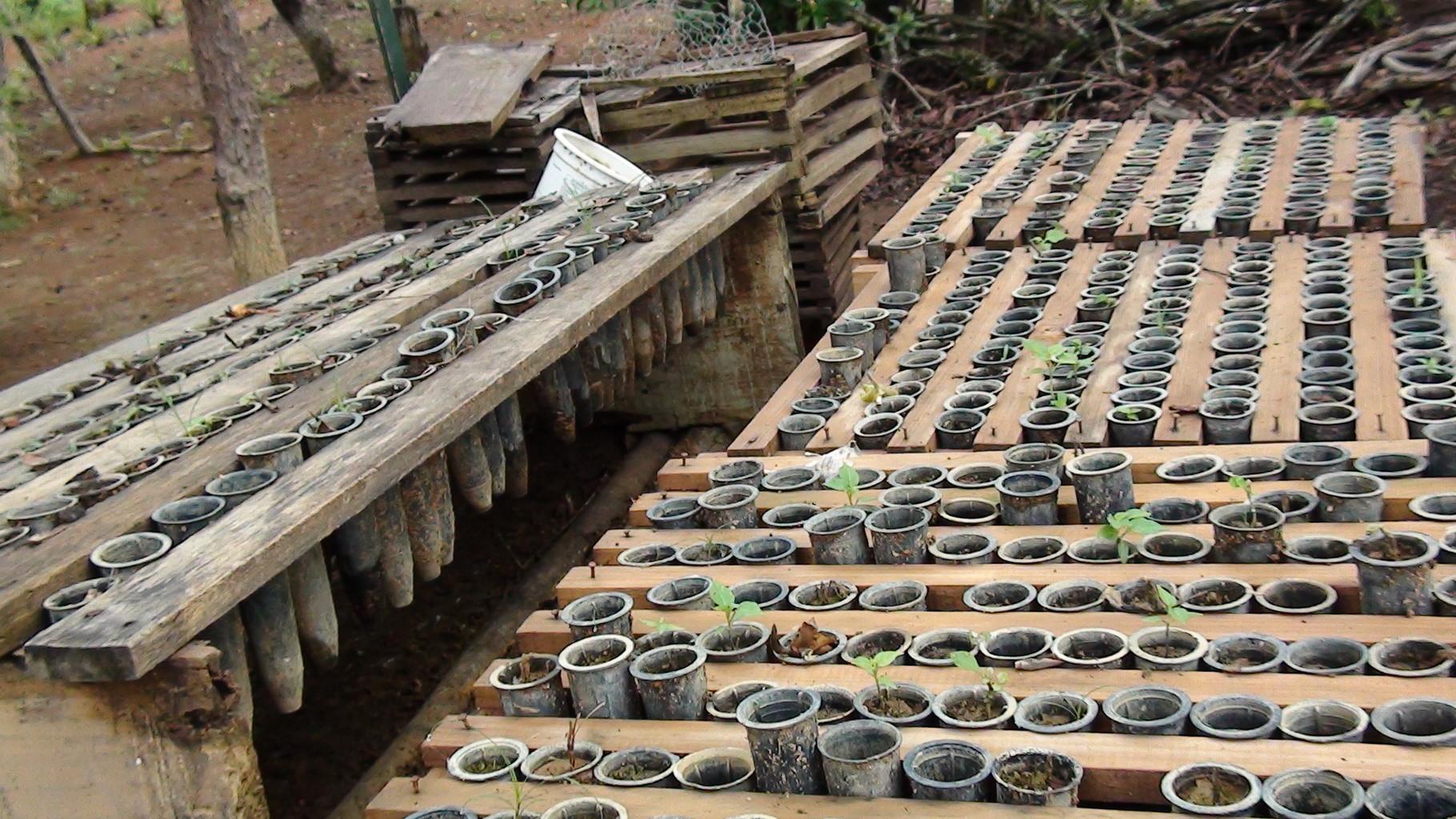 養蜂園に植える苗木も育てています。