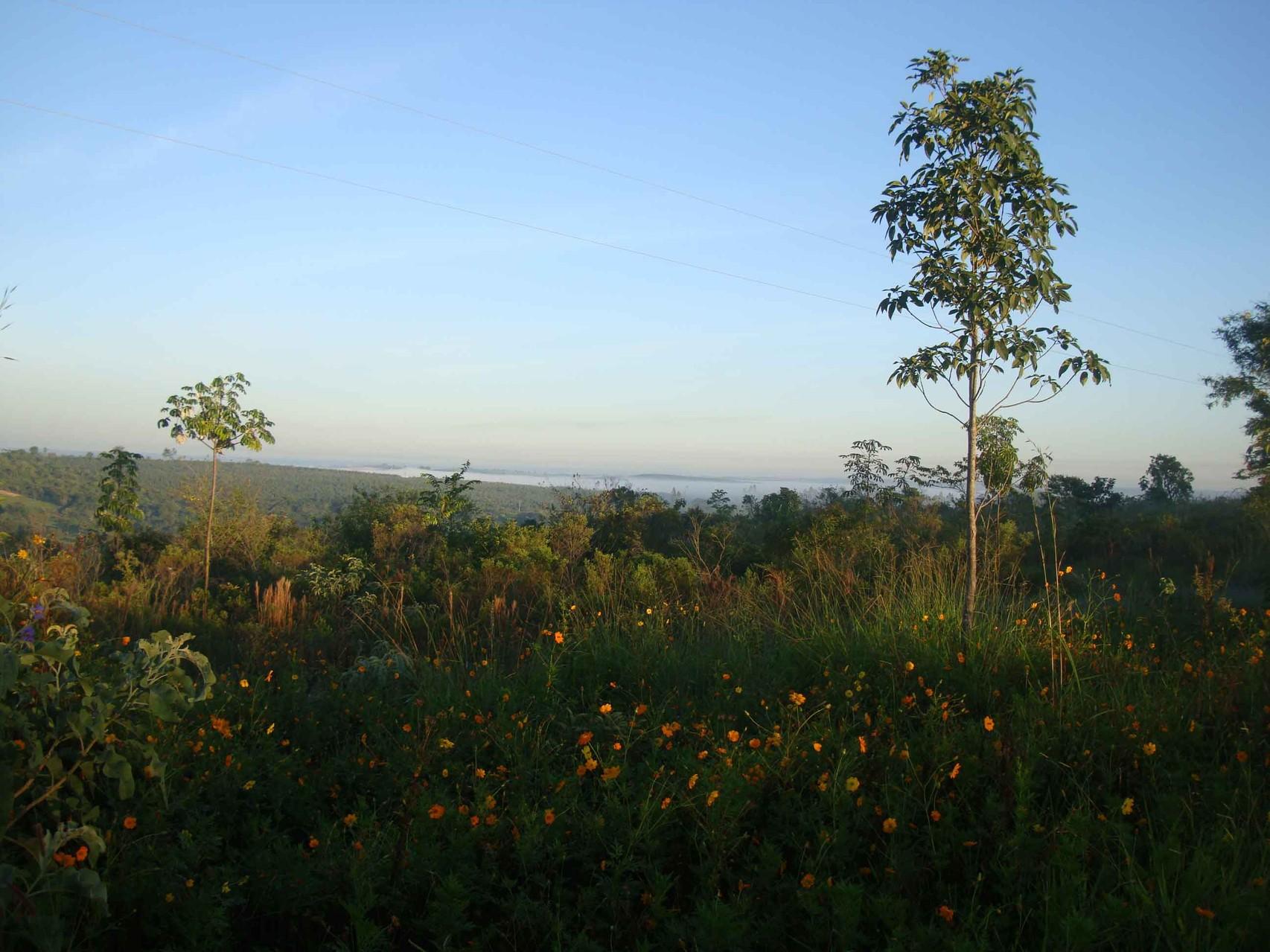 養蜂園の夜明け。地平線が広がる清々しい風景です。