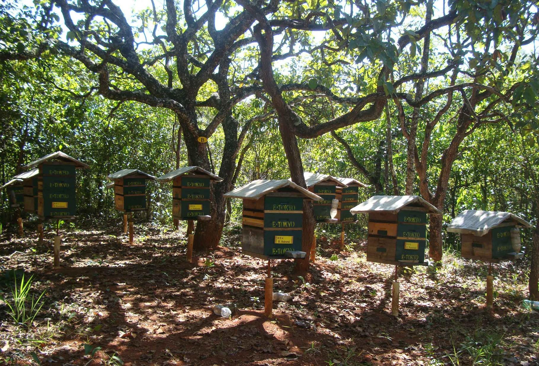 Bの巣箱エリア。3ケ月近く雨が降っていなかった割には順調に巣が大きくなっています。
