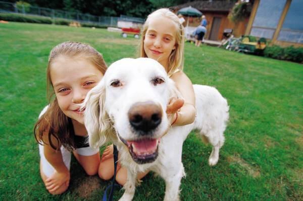 Dog Fence Layouts Alabama Pet Stop Electric Dog Fence
