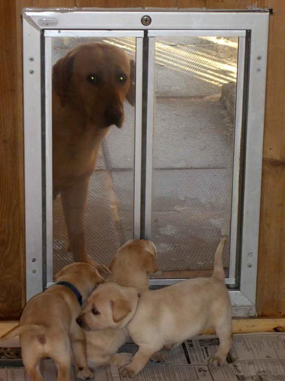 Dog Doors Amp Electronic Pet Doors Alabama Pet Stop