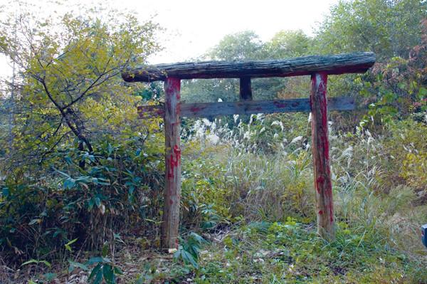 蛇王神社への道は薮になっていた