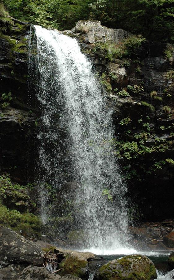 ここの滝からはもうイワナは登れない「イワナ止めの滝」だ