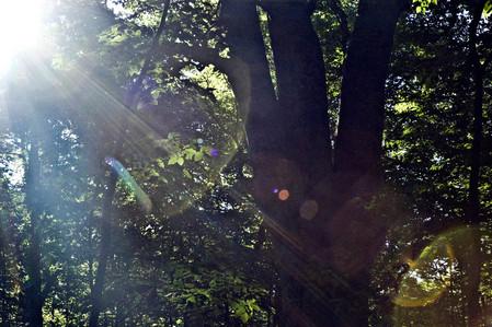 森の神(単幹国内最大)