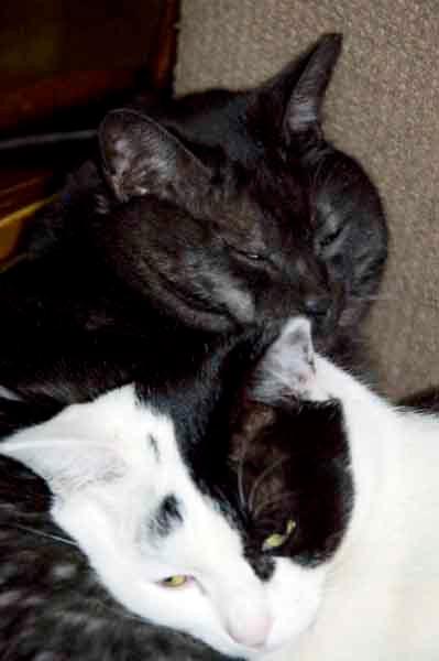 レオとユキ