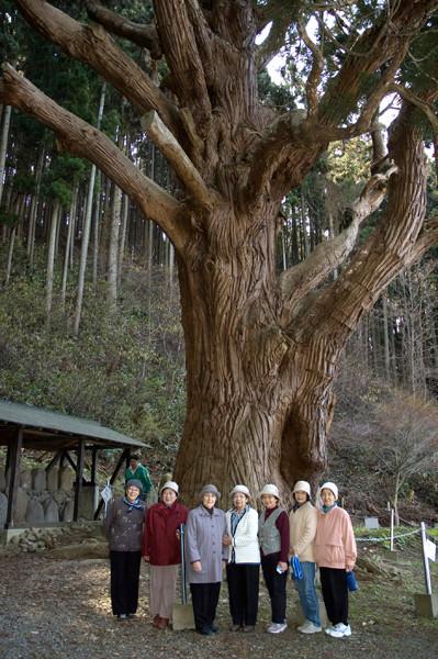 関の亀杉(深浦町)