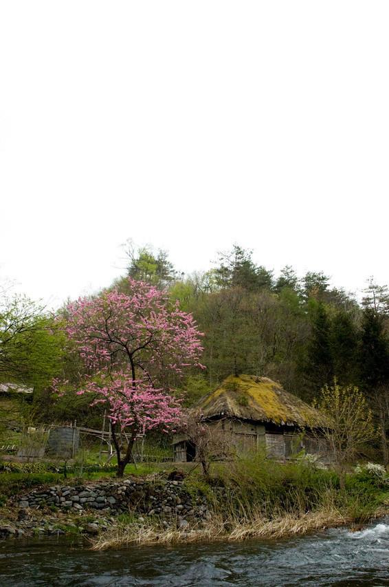 山根の春(2009年)