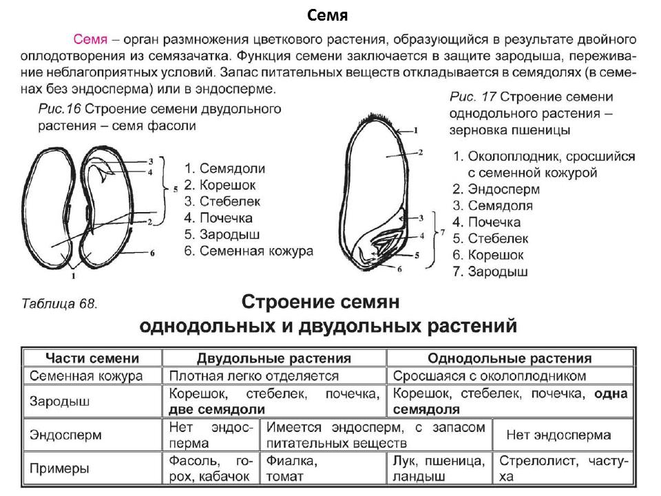 покупке ботаника в таблицах схемах тестах и терминах карта Московской области