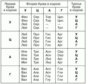 Матрицей для синтеза молекулы и рнк