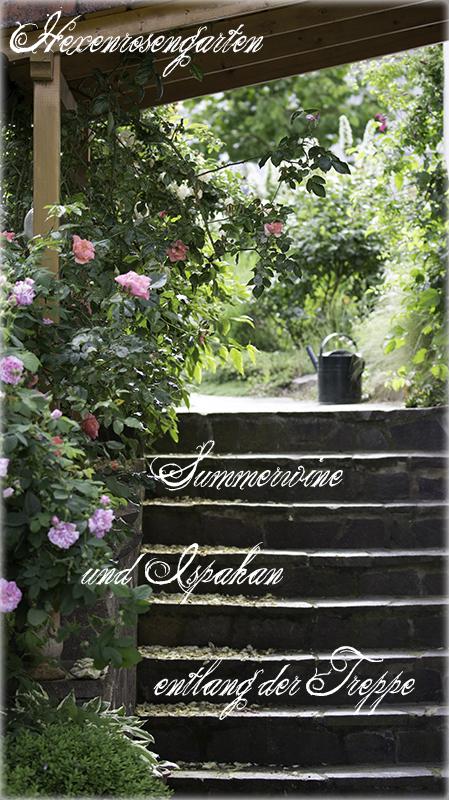 Rosen Hexenrosengarten Rosenblog  Duftrosen Kletterrose Kordes Summerwine Treppe Damaszenerrose Ispahan
