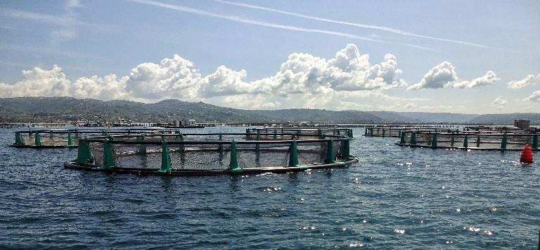 Fonda Fischfarm