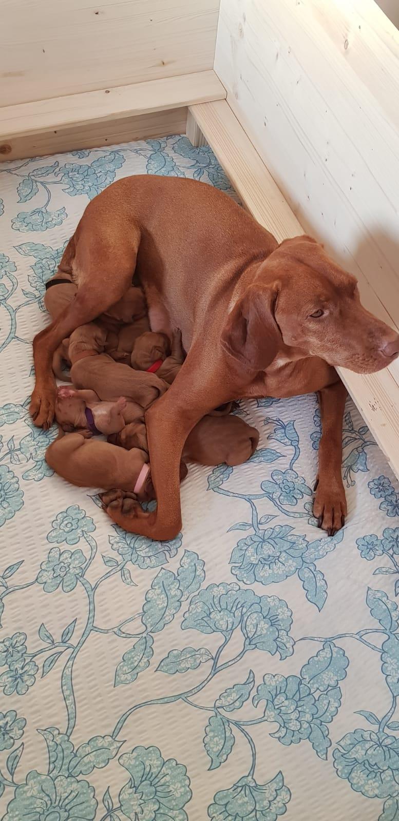Baja bewacht ihre Kids