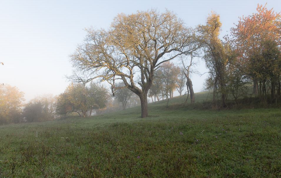 Herbst im Kraichgau