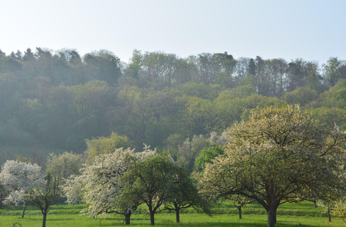 Prachtbäume