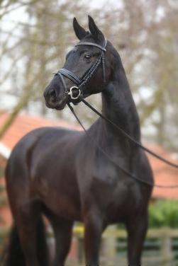 Black Prinzess
