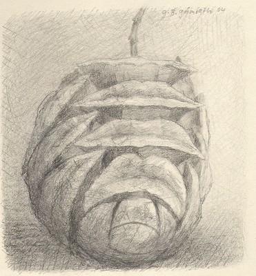 Mammutbaum, Zeichnung, 20 x 20 cm