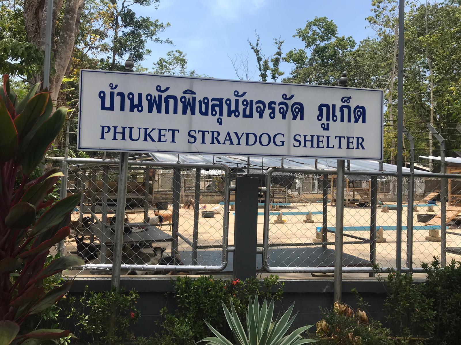 Kastration thailand freiwillige in Die Kastration