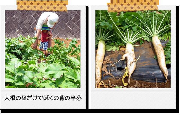 菊未会農業体験会(収穫体験)