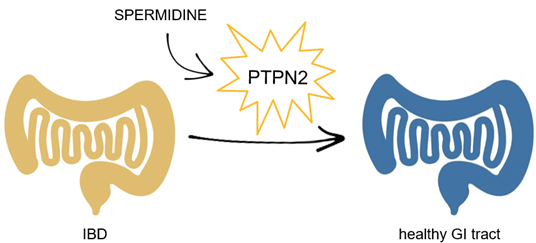 PTPN2 activation as a novel therapeutic target for the treatment of IBD