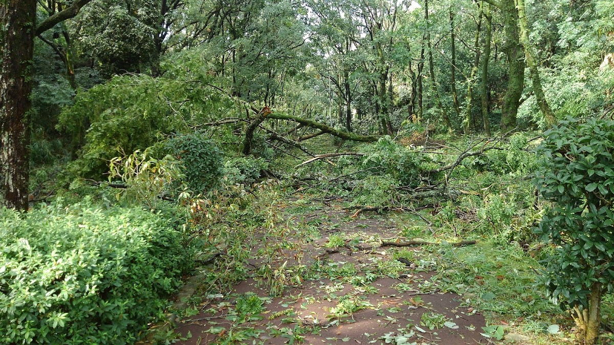 木に覆われた遊歩道が歩道をふさぐ。