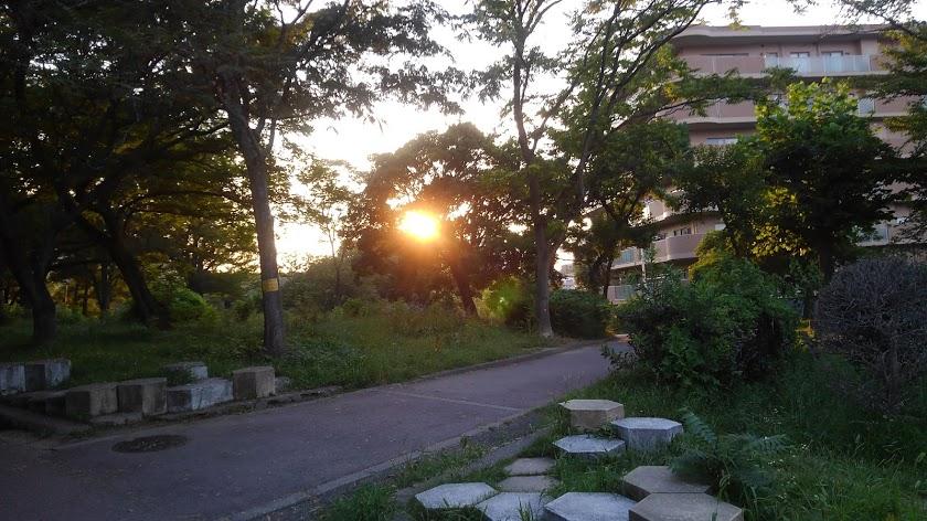 公園の木々の間からきつい西日が差し込み、スマホでシャッター
