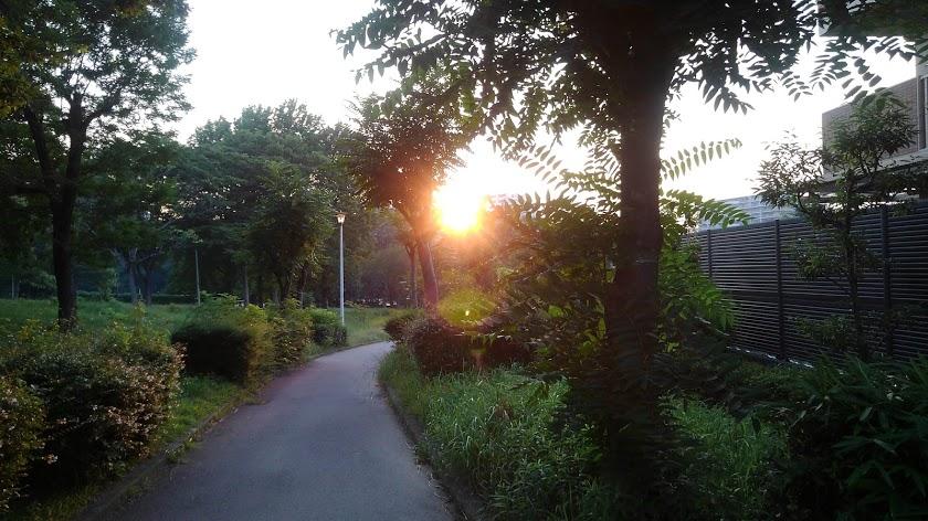 直接西日を観ることが出来ません。木々の間からスマホでシャッター