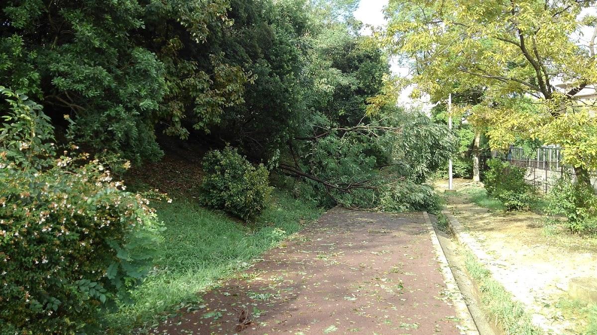 木が倒れて歩道をふさぐ。