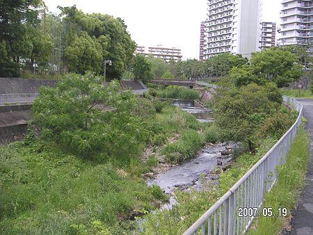 マンションの合間を縫って流れる千里川、多くの人の憩いの川になっています。