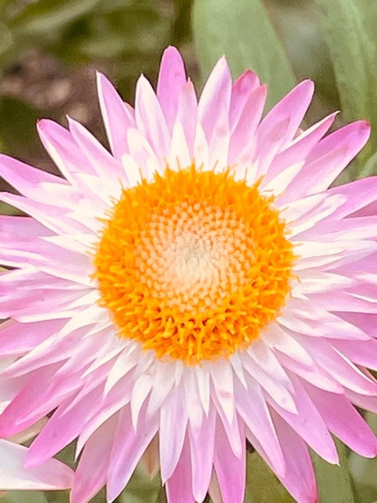 千里川沿いに咲く初夏の花に癒される