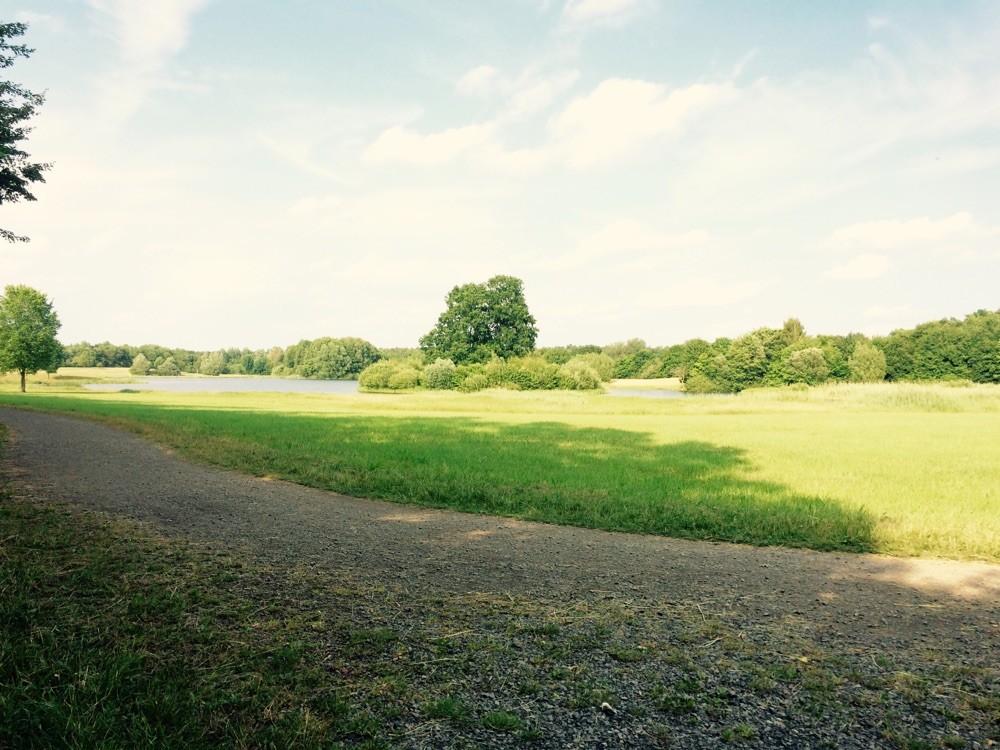 Heute haben wir am See trainiert. Regelmäßiges Training gehört zum Alltag eines Therapiebegleithundes.