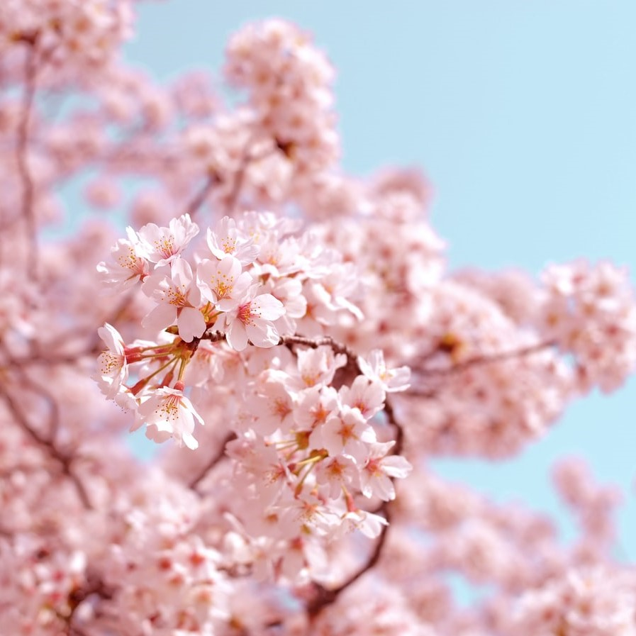 オープンボートで目黒川の桜クルーズ