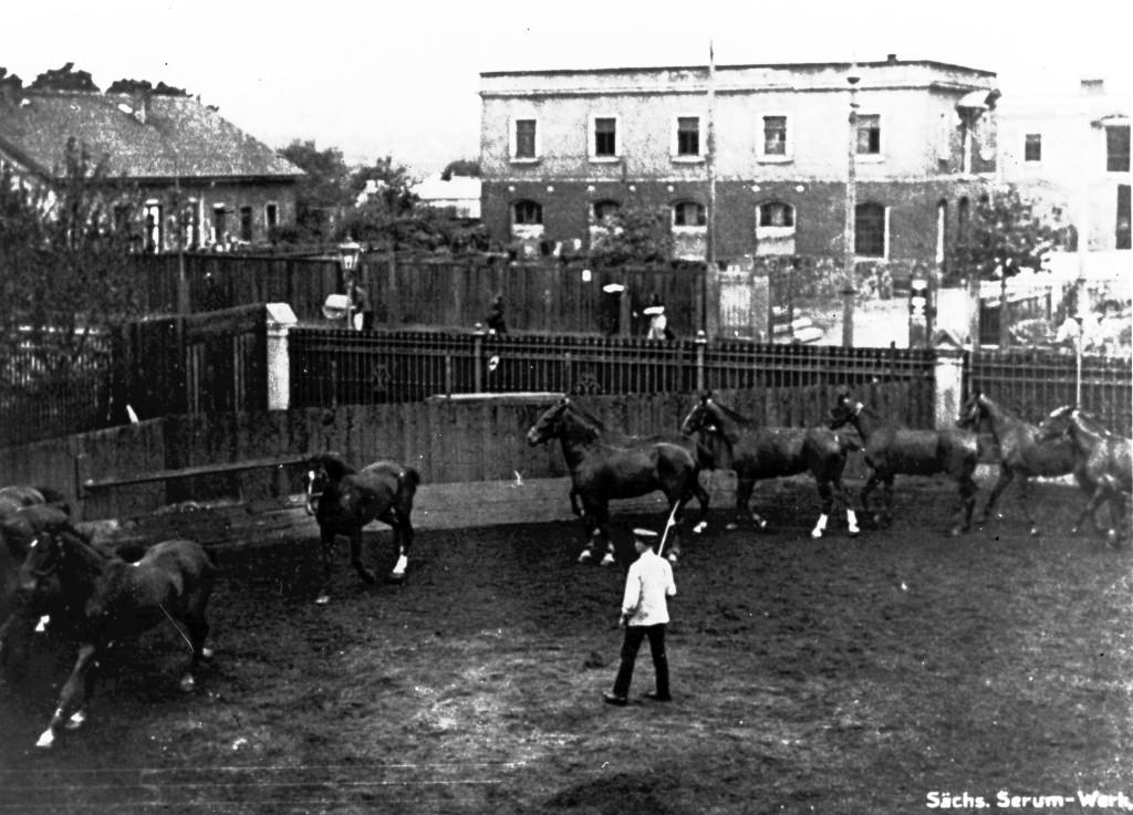 Pferdehaltung im Serumwerk