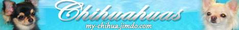 Питомник чихуахуа