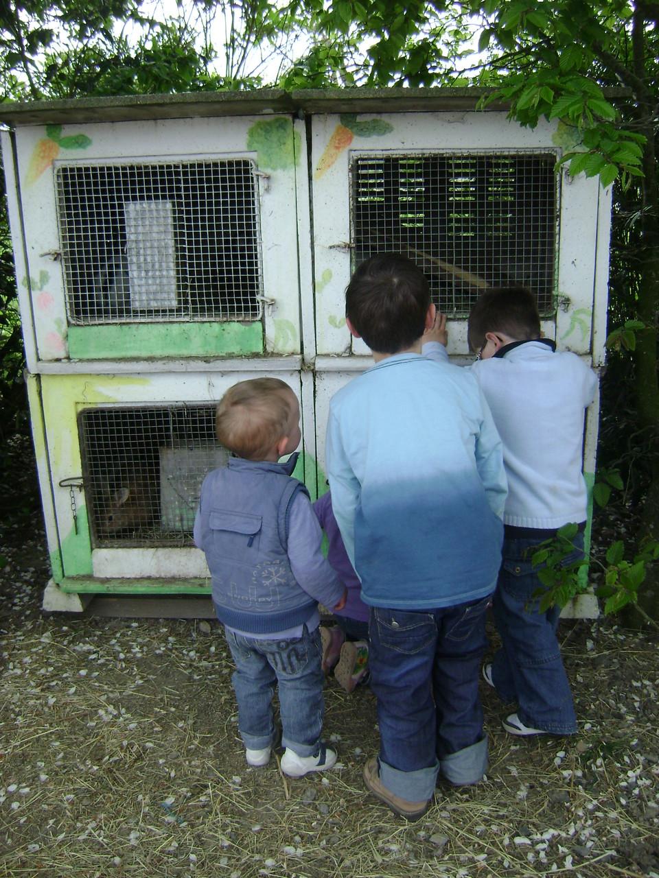 Les enfants en admiration devant les lapins