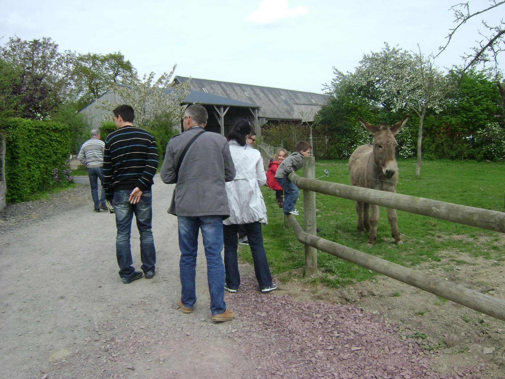 Les visiteurs font la connaissance de Trésor, notre âne
