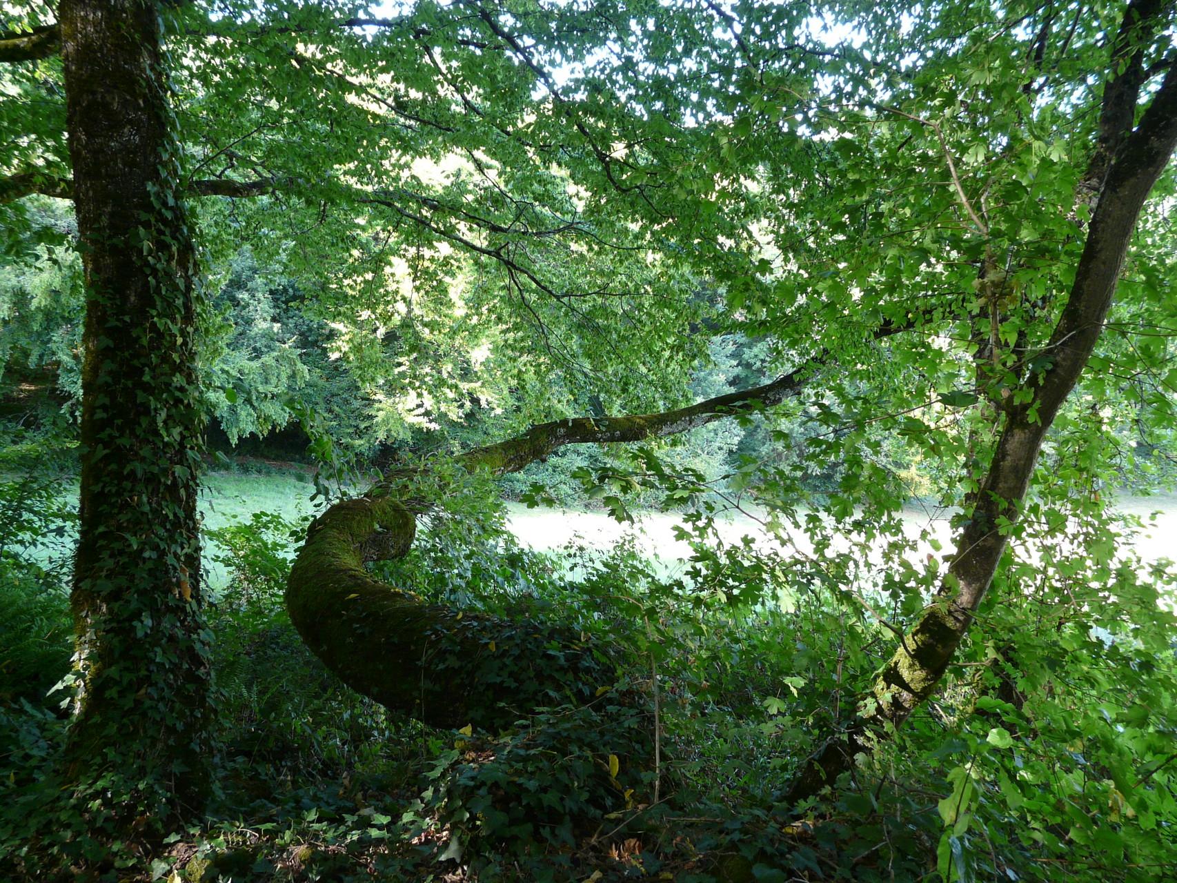Bifurcation due à l'évitement de plusieurs courants d'eau à Domme en Dordogne