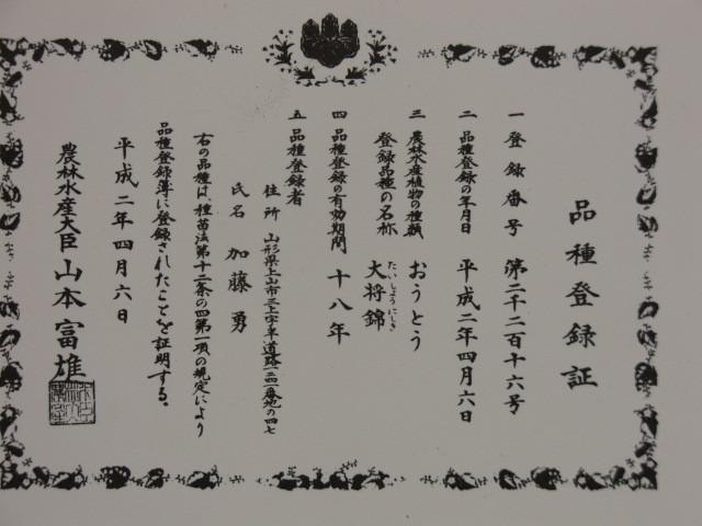 大将錦品種登録証