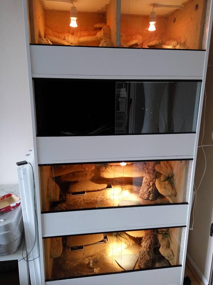 terrarienbau auf schwedisch alles f r leopardgeckos