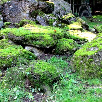 """Moose Pflanze Genügsamkeit Gartenfreunde Gartenwege entfernen Botanik Moosgebiet Murnauer Moos Ohne Moos nichts los Das """"Ewige Meer"""" in Ostfriesland"""