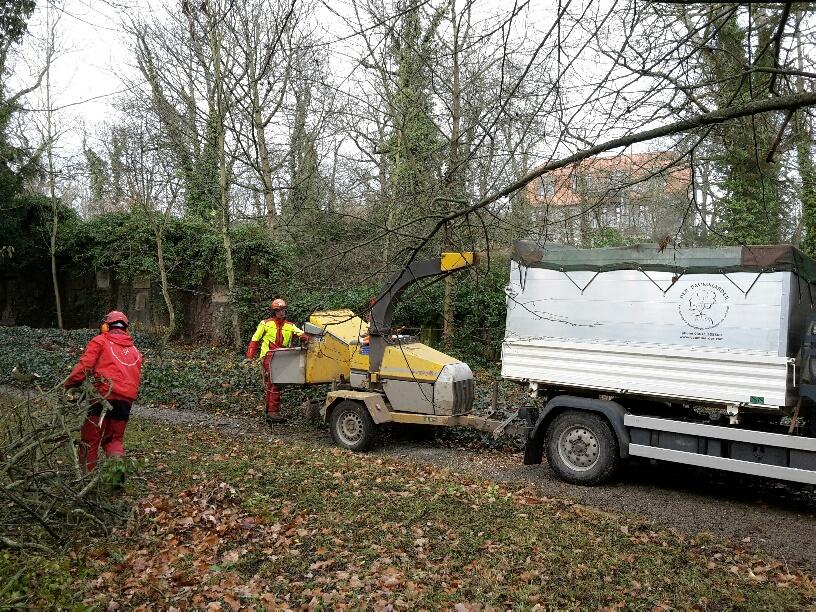 ...aber auch Totholz beseitigt und kranke und umsturzgefährdete Bäume gefällt.