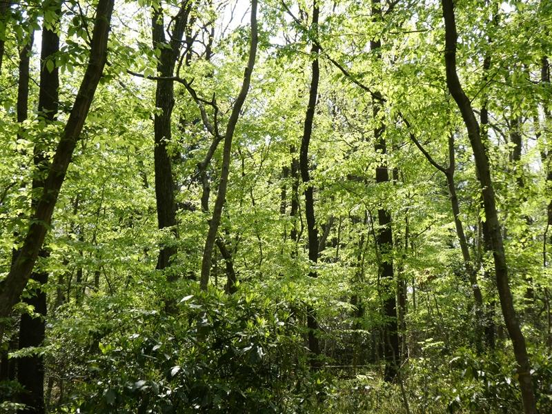 新緑萌える森