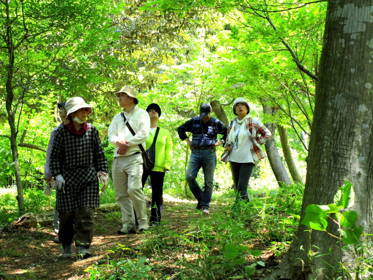 みどりの美しい樹林の中を歩き