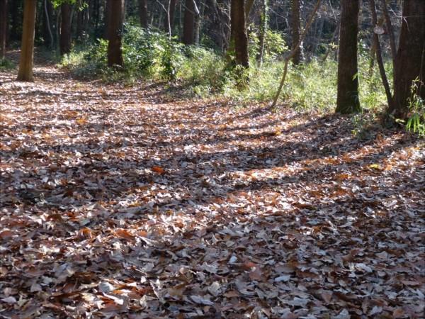 地面に散り敷く落ち葉