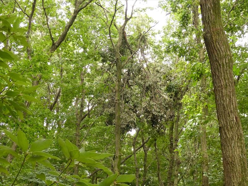 幹の折れた木