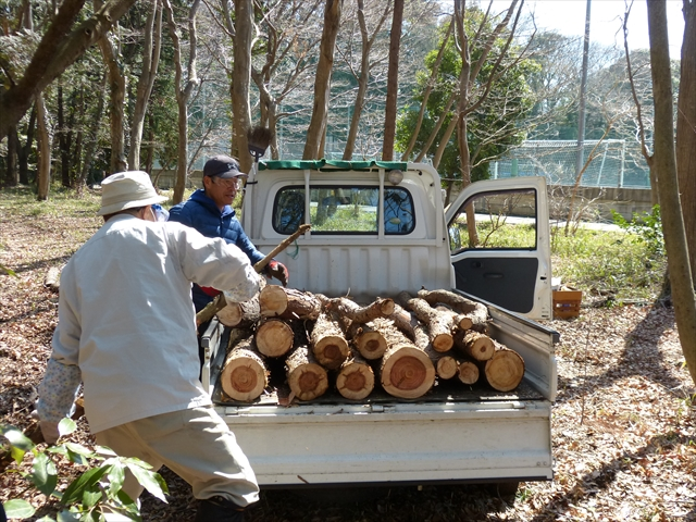 除伐木の処理