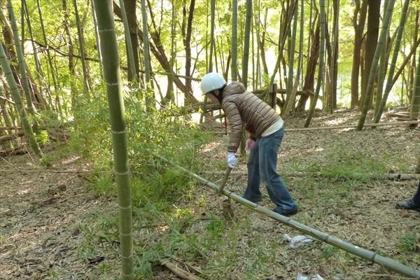 竹の枝落とし