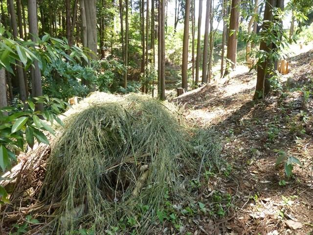 新しく生えてきた竹を刈り取り
